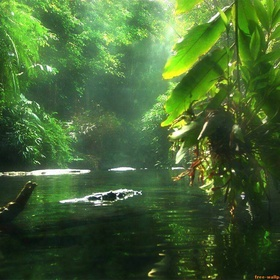 Travel to the Amazon Rainforest, South America - Bucket List Ideas