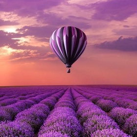 Go Lavender Picking in Provence - Bucket List Ideas