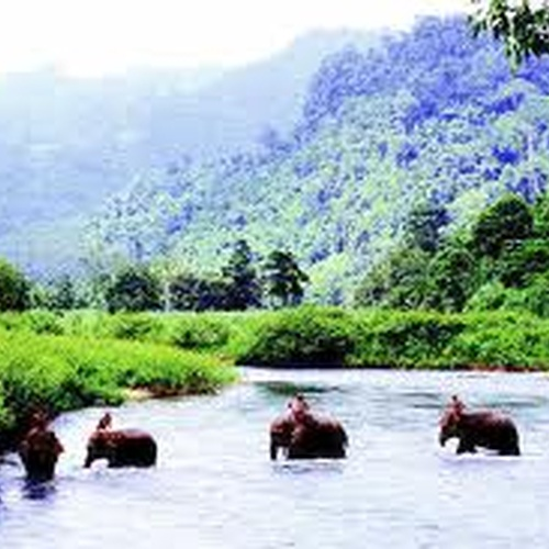 Ride an Elephant in Thailand - Bucket List Ideas