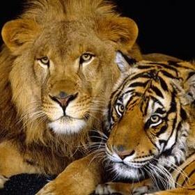 Pet a Lion or Tiger - Bucket List Ideas