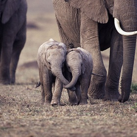 Play with baby elephants - Bucket List Ideas