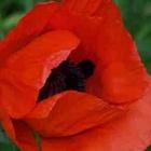 Poppy85's avatar image