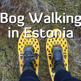 Go Bog Walking in Estonia - Bucket List Ideas