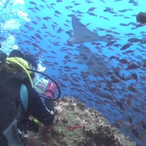 Dive at the Galápagos Islands - Bucket List Ideas