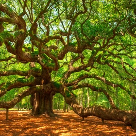 Touch 10 of the most historic/ largest trees in the United States - Bucket List Ideas