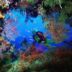 Take underwater photos - Bucket List Ideas