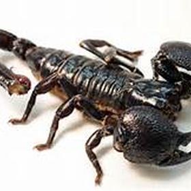 Pick up a scorpion - Bucket List Ideas