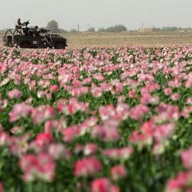 See the poppy fields of Helmand, Afghanistan - Bucket List Ideas