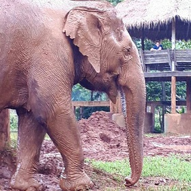 Volunteering with elephants in Thailand - Bucket List Ideas