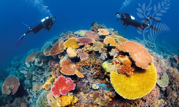 SCUBA dive the Great Barrier Reef - Bucket List Ideas