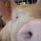 PickleLover's avatar image