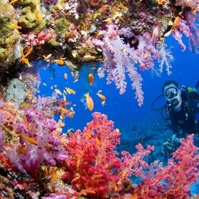 Dive in Tubbataha reef - Bucket List Ideas