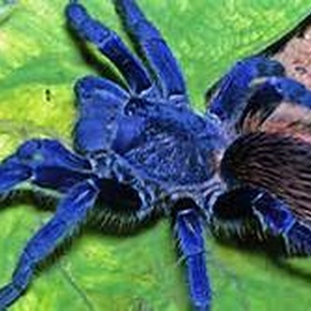 Discover a new species - Bucket List Ideas