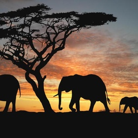 Experience wild life in africa - Bucket List Ideas