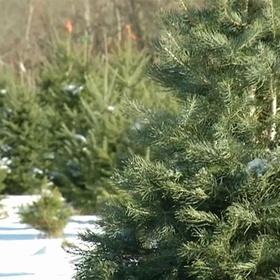 Christmas - Visit A Tree Farm - Bucket List Ideas