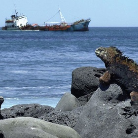 Visit Galapagos Islands - Bucket List Ideas