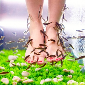 Have A Fish Pedicure - Bucket List Ideas