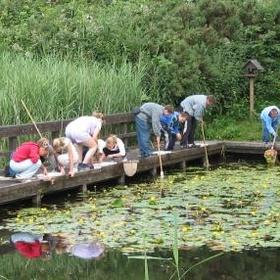 Go pond dipping - Bucket List Ideas