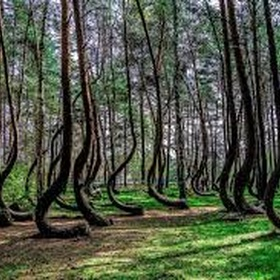 Visit the crooked forest - Bucket List Ideas