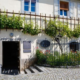 Visit the oldest grape vine in the world - Bucket List Ideas
