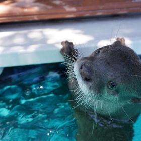 Swim with otters - Bucket List Ideas