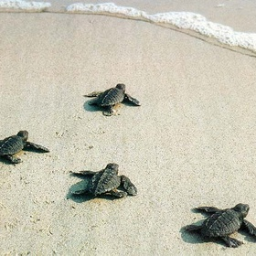 Assist a new born sea turtle in getting to the sea - Bucket List Ideas