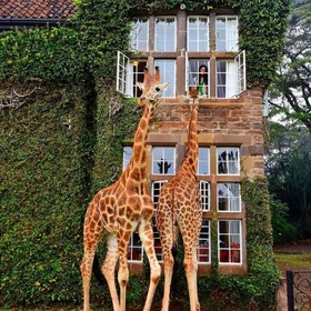 Visit Giraffe Manor - Bucket List Ideas