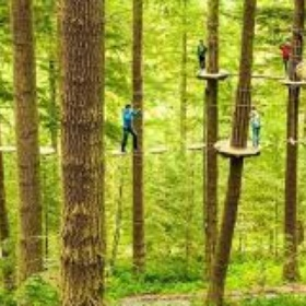 Do Go-ape - Bucket List Ideas