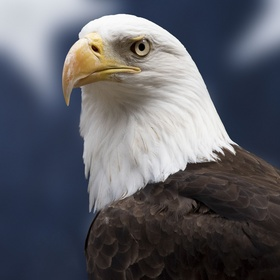 Hold a eagle - Bucket List Ideas