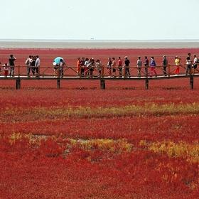 Visit Red Beach, Liaoning, China 红海滩 辽宁盘锦双台子河口 - Bucket List Ideas