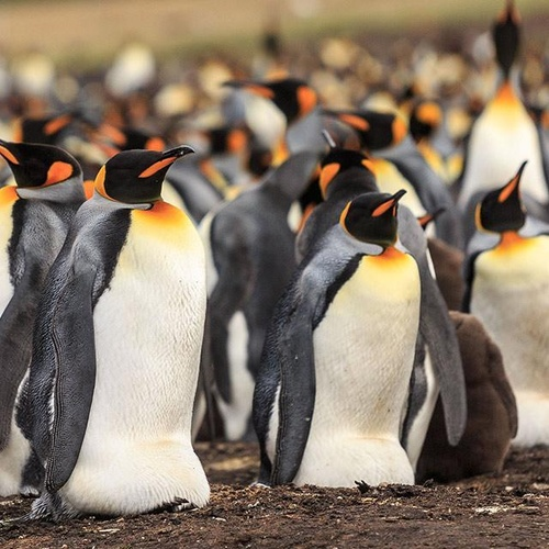 See A Pinguin Colony - Bucket List Ideas