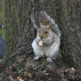 Feed pigeons and squirrels in St James Park, London - Bucket List Ideas