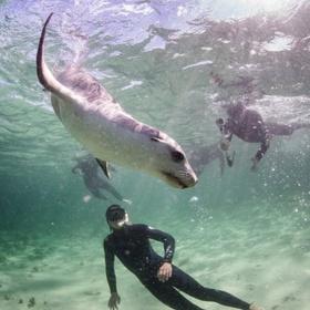 Swim with sea lions in Bairds Bay - Bucket List Ideas