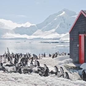 Go to the penguin post office in Antarctica - Bucket List Ideas
