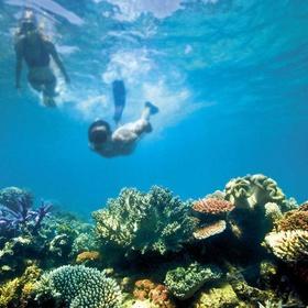 Go snorkeling around the Great Barrier Reef - Bucket List Ideas