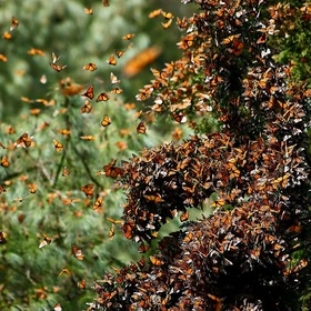 Visit Michocan's Monarch Sanctuary, Mexico - Bucket List Ideas