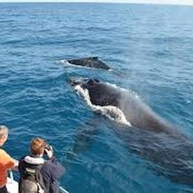 Whale watching in quebec - Bucket List Ideas