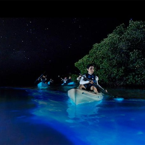 Swim in Bioluminescent water - Bucket List Ideas
