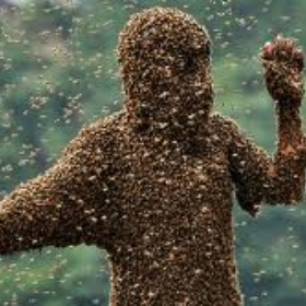 Be covered by bees - Bucket List Ideas