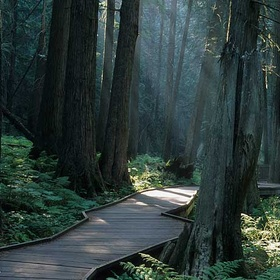 Walk the Trail of the Cedars in Glacier National Park, Montana - Bucket List Ideas