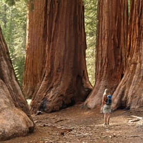 See the Redwoods - Bucket List Ideas