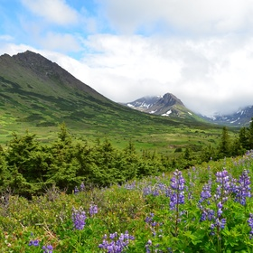 Visit Chugach State Park in Alaska - Bucket List Ideas