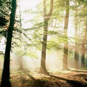Go on an early morning forest walk - Bucket List Ideas