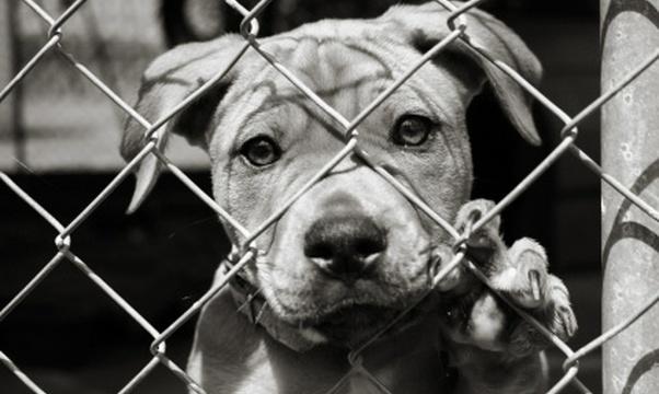 Adopt an animal - Bucket List Ideas