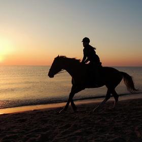 Learn how to drive a horse - Bucket List Ideas
