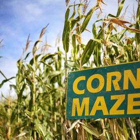 Walk Through a Corn Maze - Bucket List Ideas