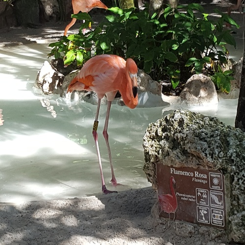 See a real flamingo - Bucket List Ideas
