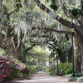 Visit Savannah, Georgia - Bucket List Ideas