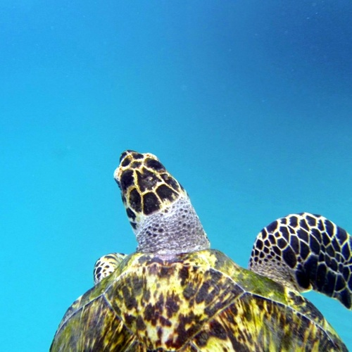 Swim with Turtles - Bucket List Ideas