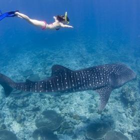 Get padi certified for scuba diving - Bucket List Ideas